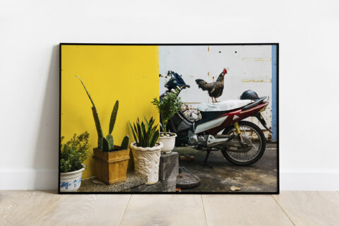 Print of a rooster on the top of a motorcycle in the narrow streets of Ho Chi Minh