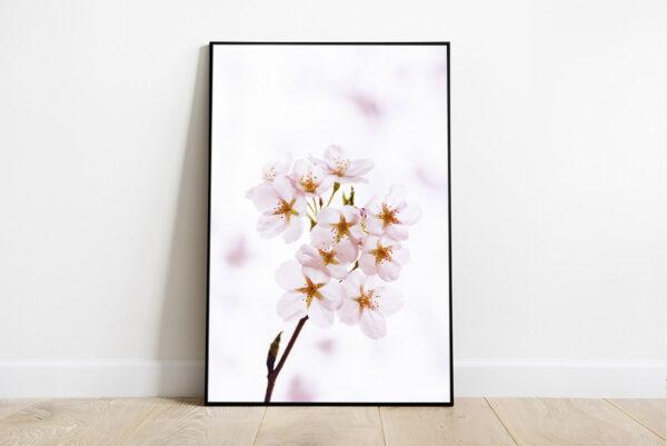 White cherry blossom with white background print