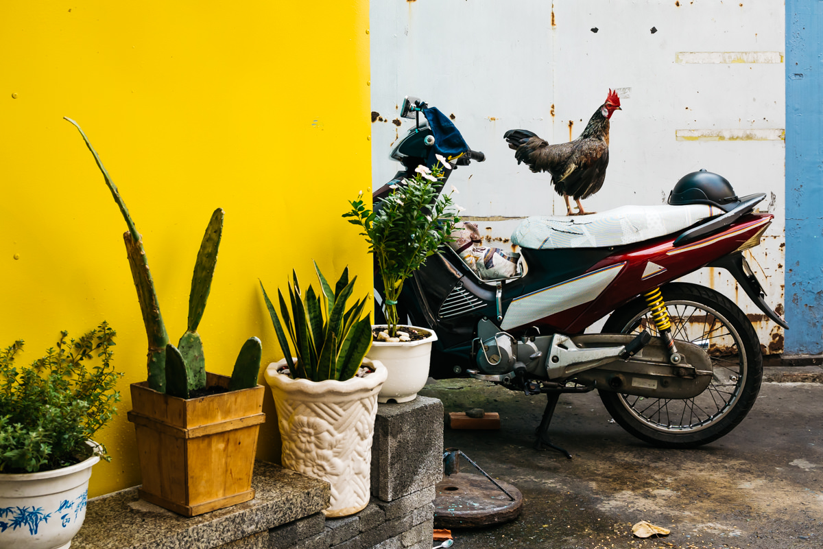 Rooster on the top of a motorcycle in the streets of Ho Chi Minh, Vietnam