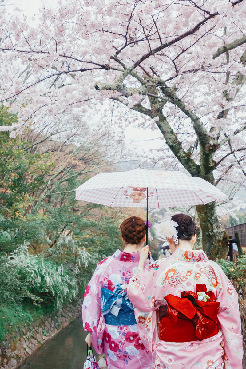 Philosophy path full of cherry blossoms, in Kyoto, Japa