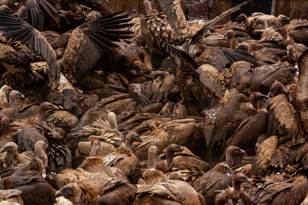 Cloud of beaks and feathers in the Sky Burial, Larung Gar, China