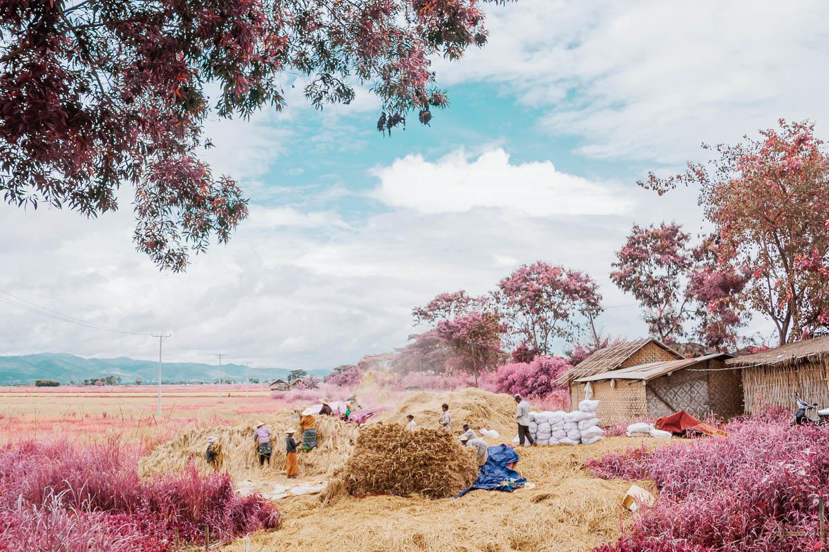 Fields of Inle Lake, Myanmar in Kodak Aerochrome emulation