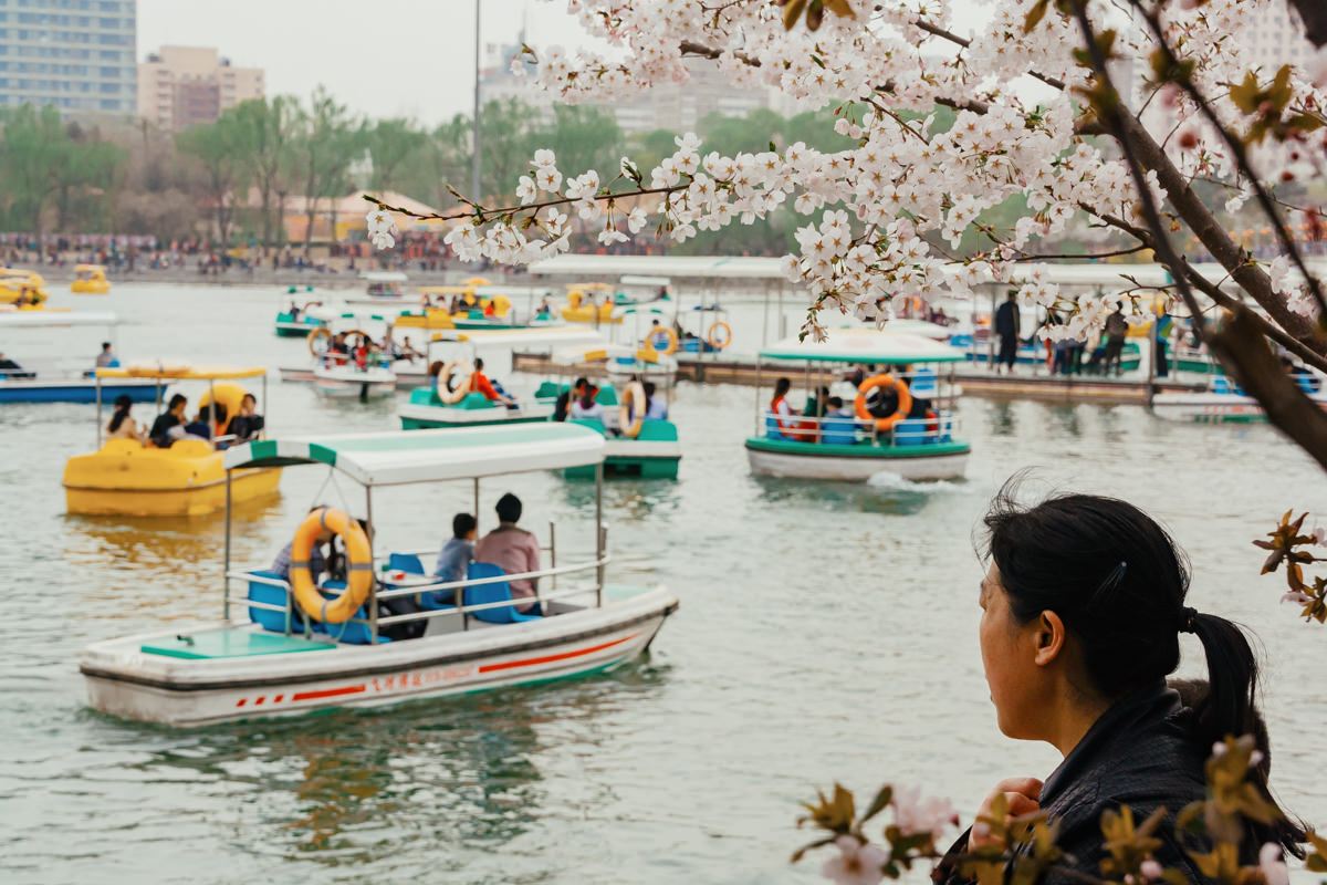 Cherry blossoms in Beijing, China